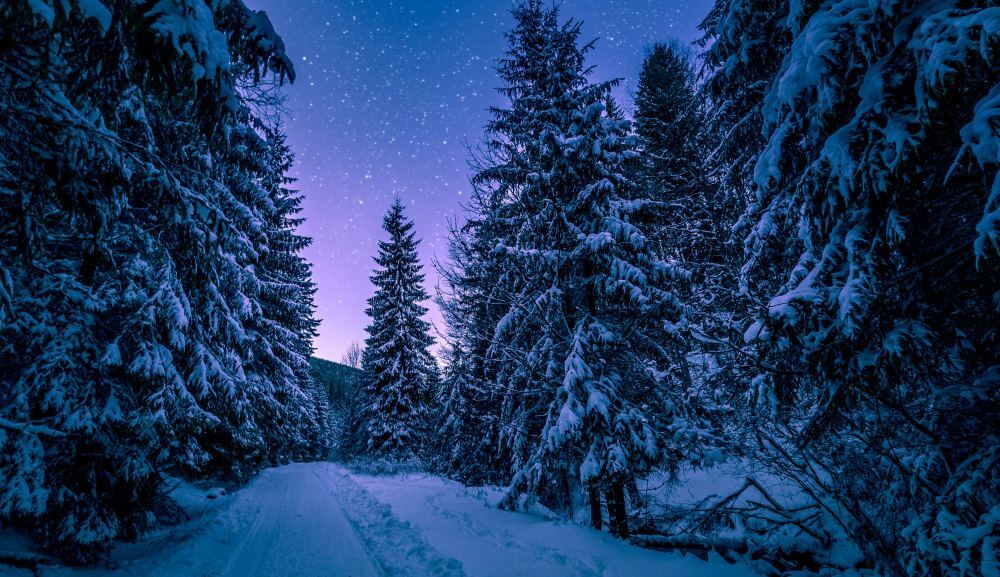 Beautiful snowy forest on a Christmas night