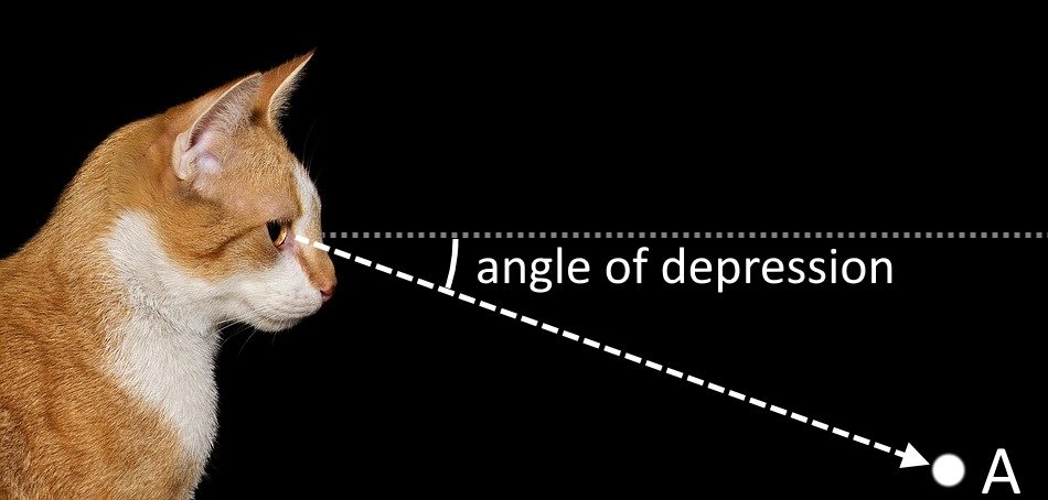 Illustration showing the angle of depression made by a cat's line of sight towards a point.