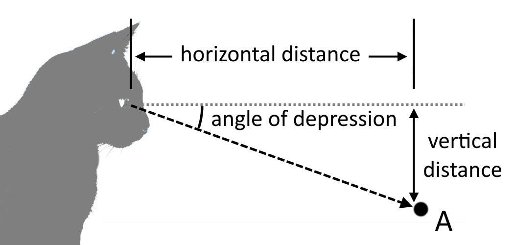 Illustration showing the horizontal distance between the viewer and an object, as well as the vertical between the object and the viewer's eyes.