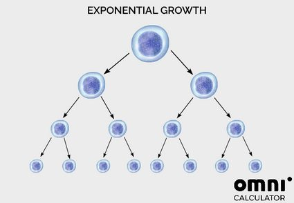 Exponential growth of cells. Each cell devides into two.