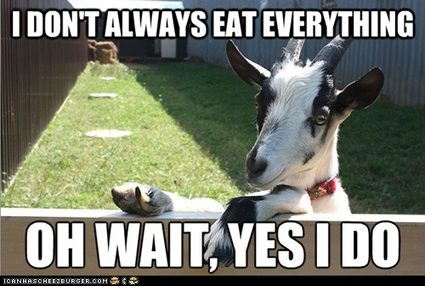 Make sure the pregnant goats are well fed.
