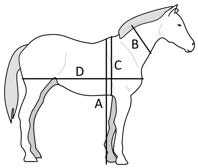 The measurements to calculate horse weight.