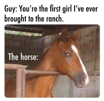 A horse will always have your back.