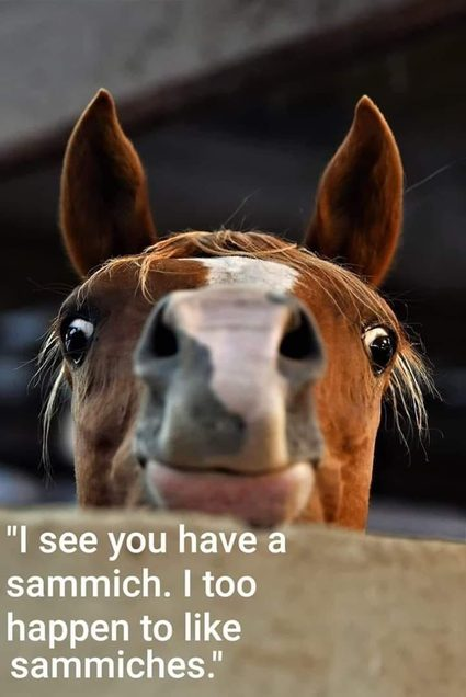 Make sure to check if your buddy is somewhere around the average horse weight.