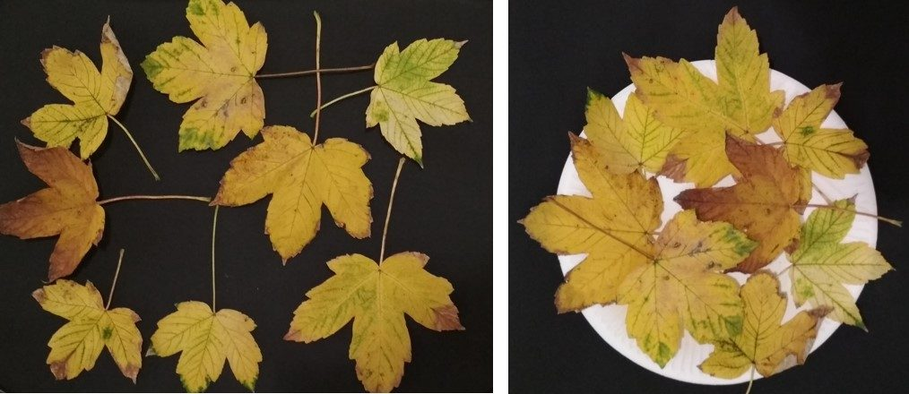 Leaves on the table and leaves on the round paper plate