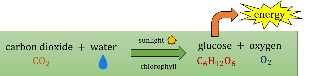 A scheme of a photosynthesis process
