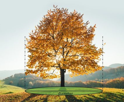 Picture showing how to measure the area beneath tree crown