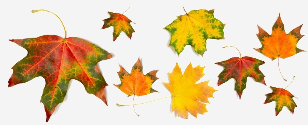 Leaves in different colors