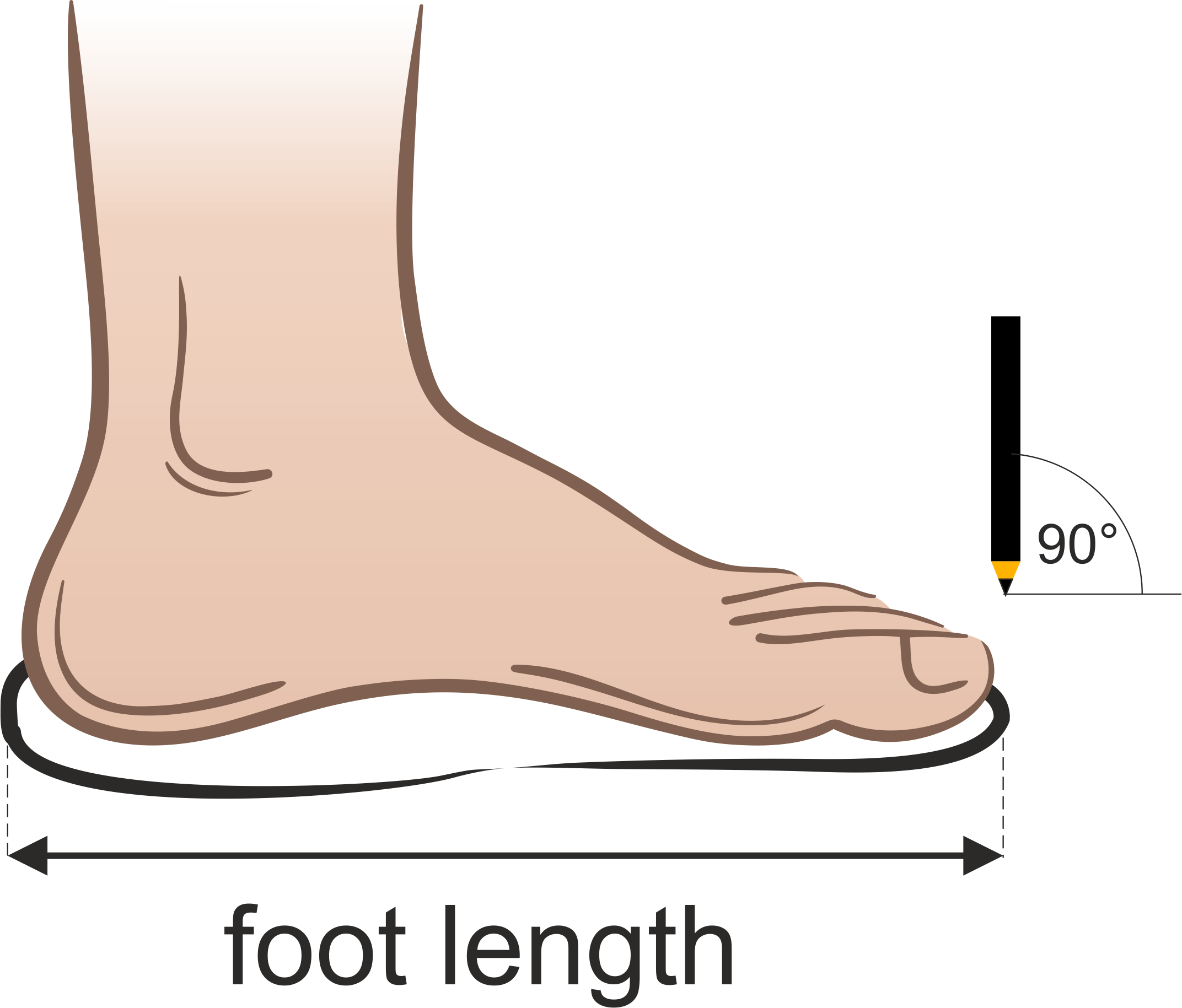 foot length measurement