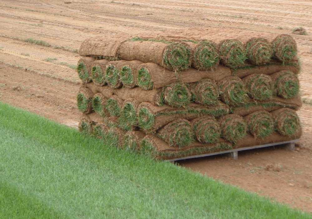 rolls of sod on a pallet