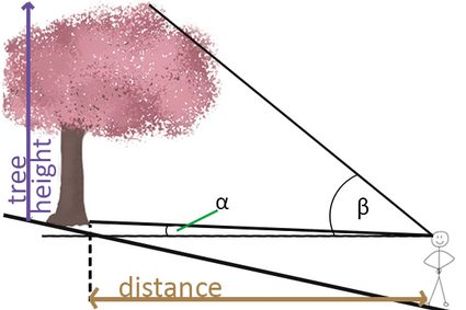 Tree height measurement when tree is above the viewpoint