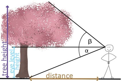 Tree height measurement when tree is on the same level