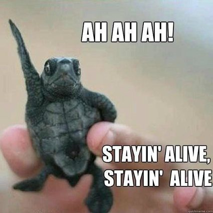 meme with a turtle singing ah ah ah staying alive