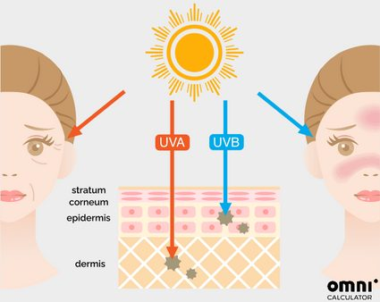 effects of UVA and UVB radiation on the skin